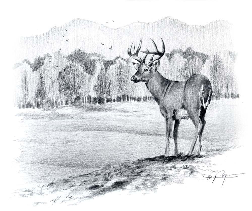 Drawn buck pencil sketch Signed BUCK Pencil Rogers Artist