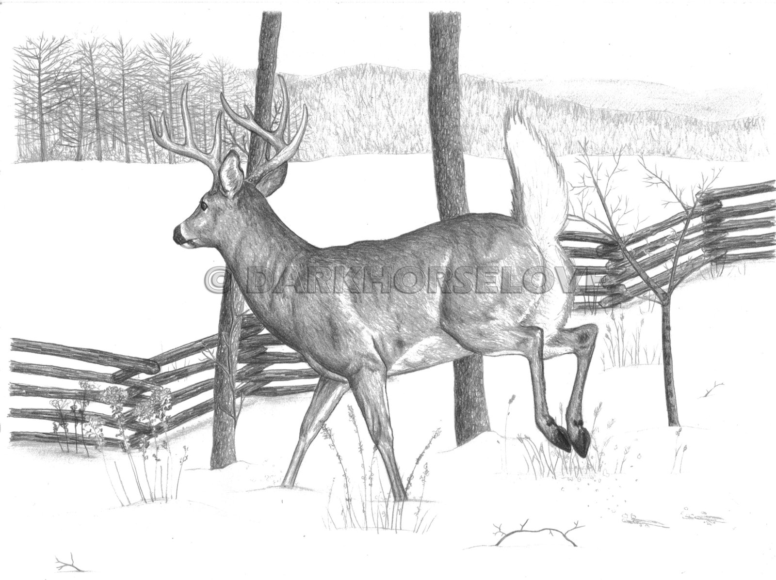 Drawn buck traditional On by by Whitetail Deer