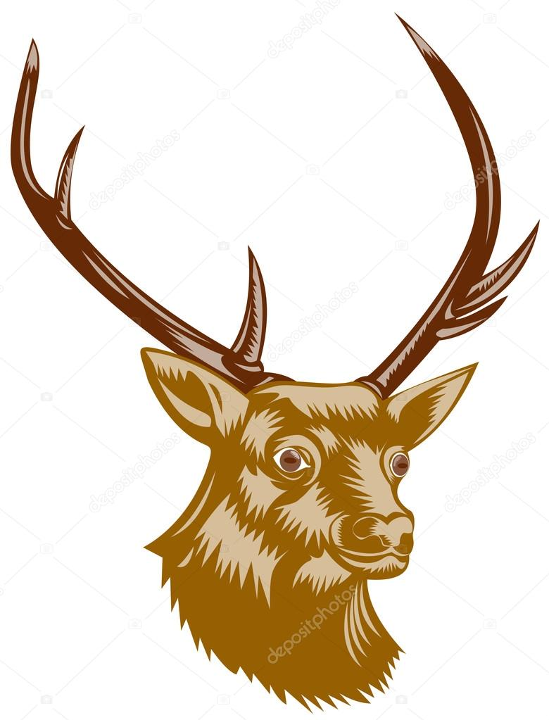 Drawn buck woodcut © Illustration Buck – Deer
