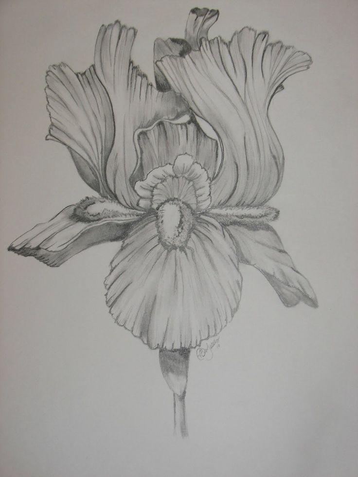 Drawn bud my school Com  on Flower Iris
