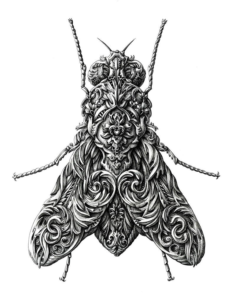 Drawn insect #1