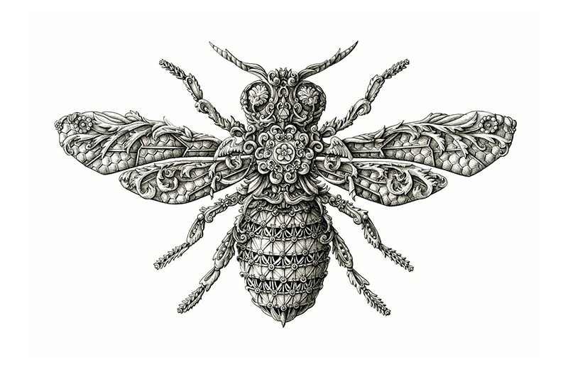 Drawn insect #2