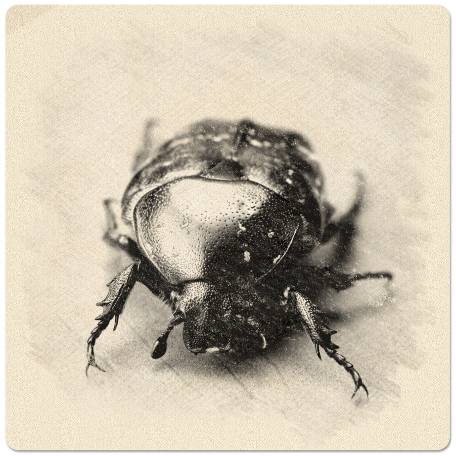 Drawn bug artistic Drawing photo nice of Online