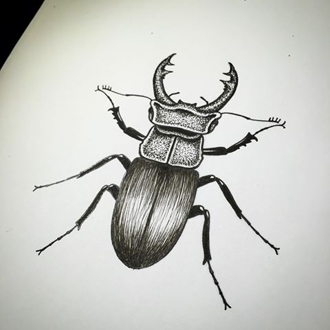 Drawn bugs dotwork Instagram videos #art Hellesen Beetle