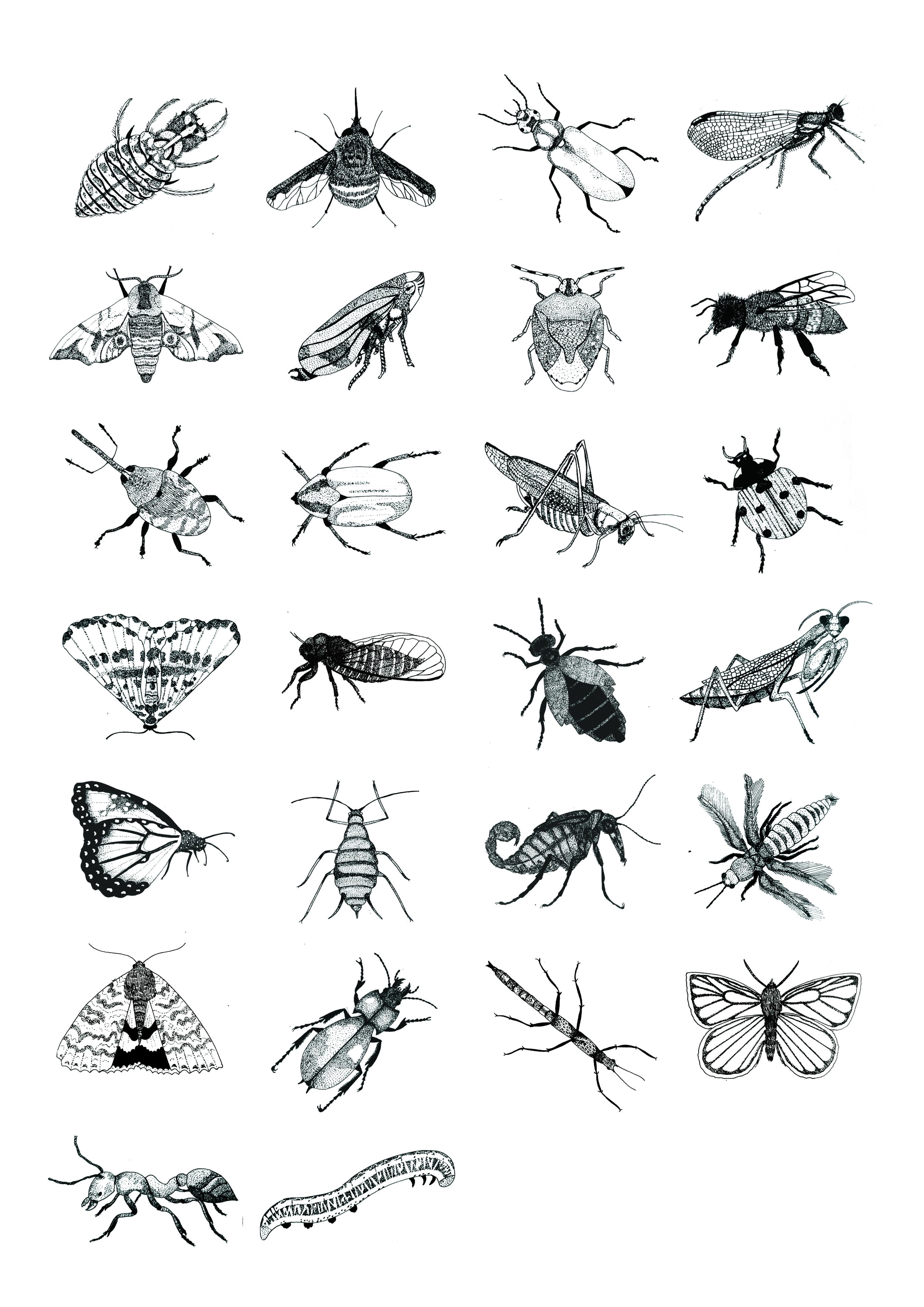 Drawn bug entomology Parker and Design Illustration Insect