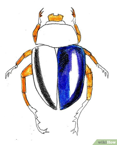 Drawn bugs scarab beetle How Pictures) Scarab Draw Scarab