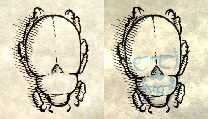 Drawn bug skull Beneath skull story invisible Bug