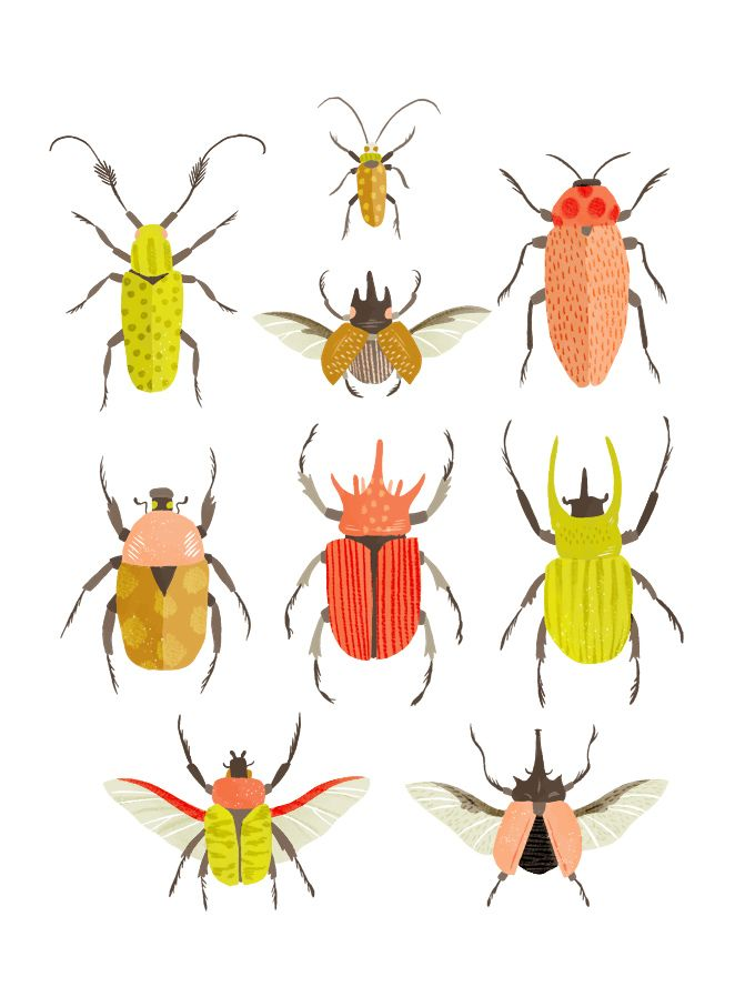 Drawn bugs termite Residence Our call images Charts