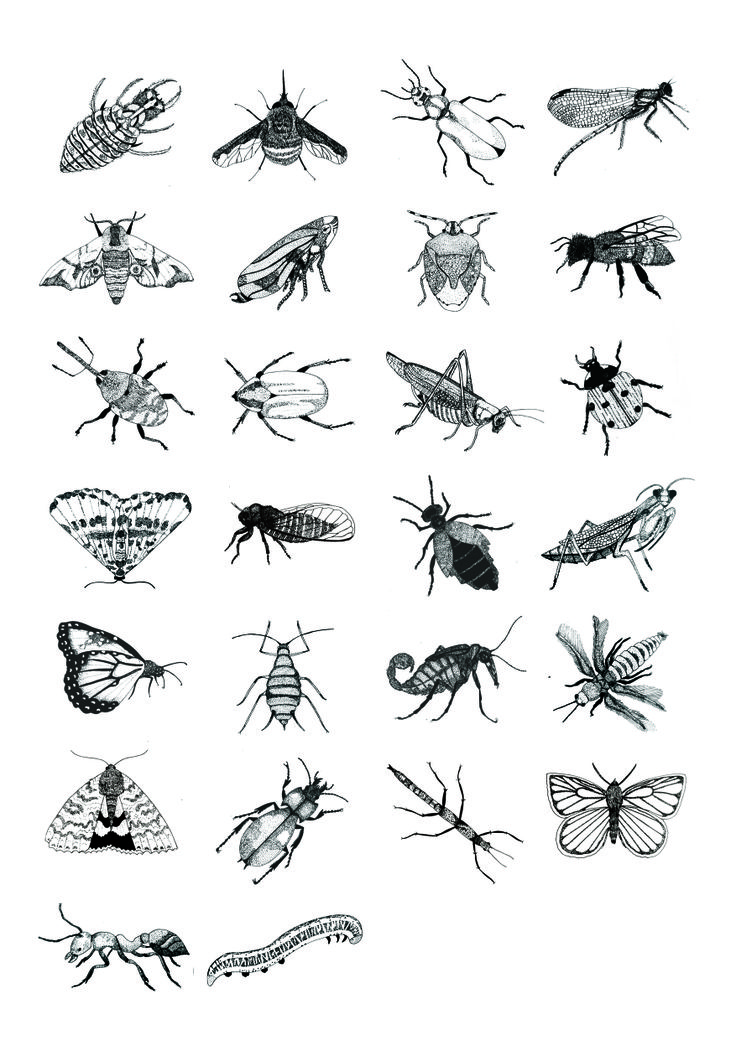 Drawn bugs My Insecten A 90 Entomology