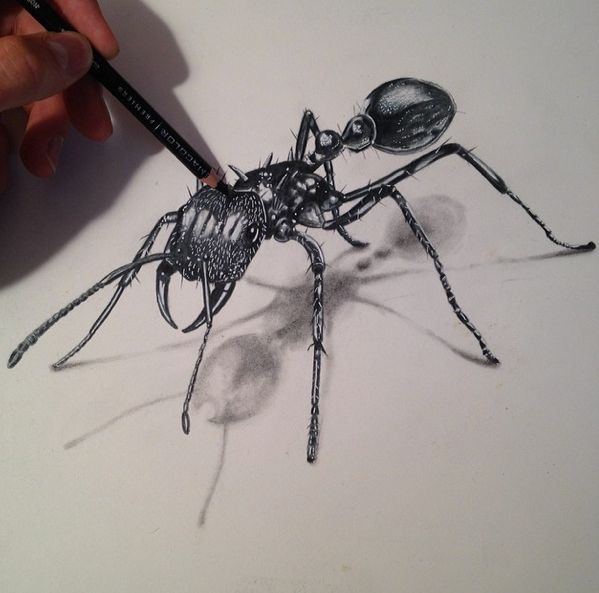 Drawn bugs Been ideas  insects Ant!
