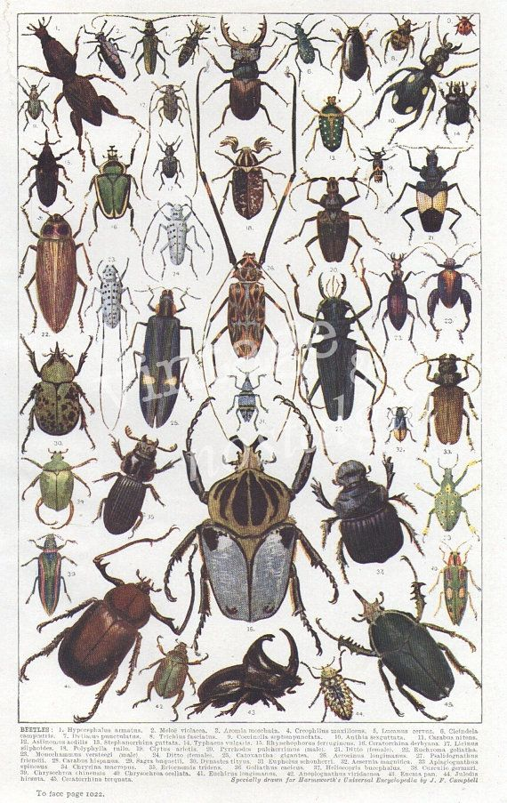 Drawn bugs detailed Fauna Scientific Best Other print