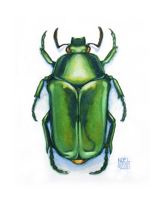 Drawn bugs scarab beetle 8 Beetle watercolor Scarab Beetle