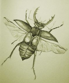 Drawn bugs sketch Find and Insect Nature Original