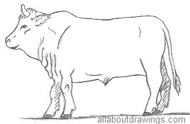 Drawn bull Pencil in Outline Drawing Drawings