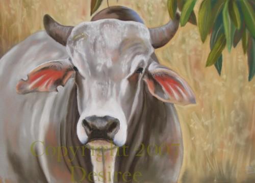 Drawn bull brahma bull  bull Brahma WetCanvas