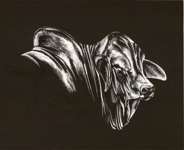 Drawn bull brahma bull Brahman by Brahman by Bull