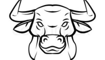 Drawn bull easy Head step step draw draw