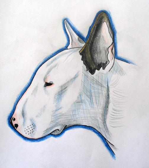 Drawn bull terrier Bull bit Fib terrier on