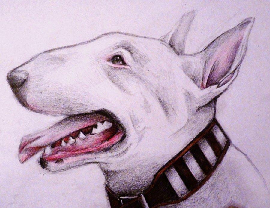 Drawn bull terrier By #Terrier #Bull on @deviantART