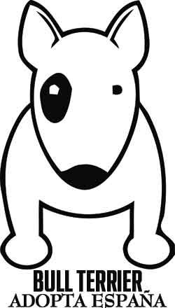 Drawn bull terrier cartoon About Google on images best