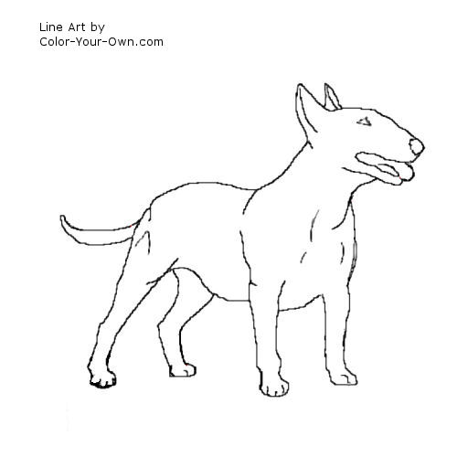 Drawn bull terrier drawing Line a terrier; drawing art