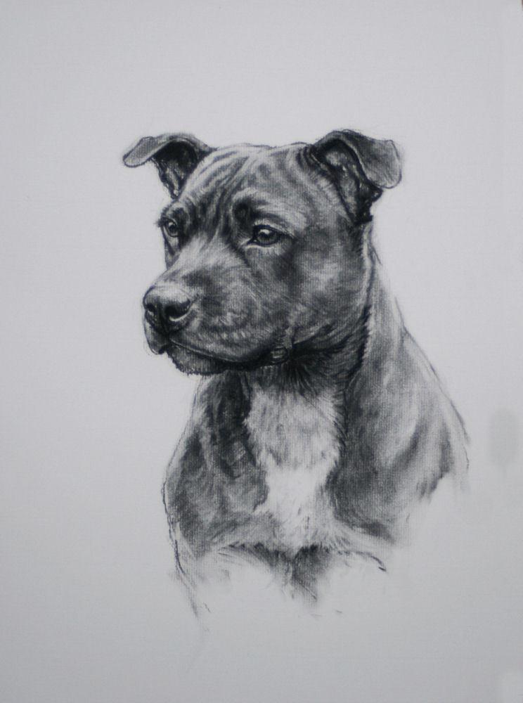 Drawn bull terrier terrier dog Drawing print Irvine H fine