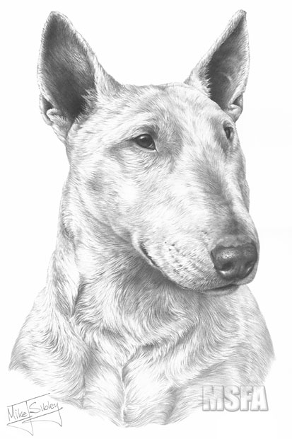 Drawn bull terrier terrier dog Dog Mike ENGLISH Sibley drawing