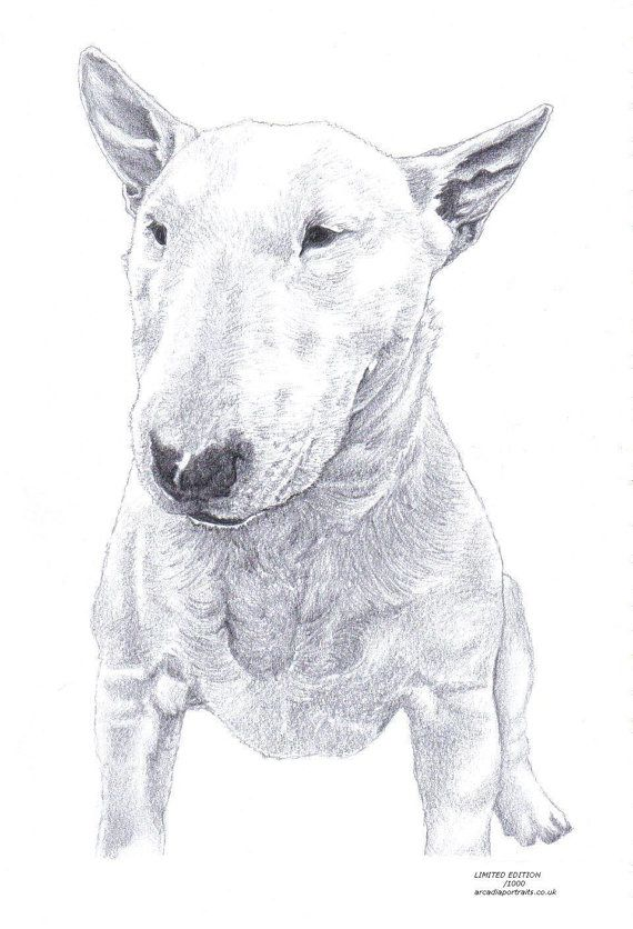 Drawn bull terrier terrier dog Terrier signed UK by drawing