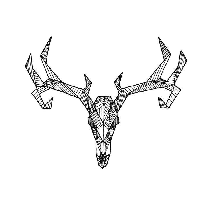 Drawn buck geometric Best Skull Skeleton on Art