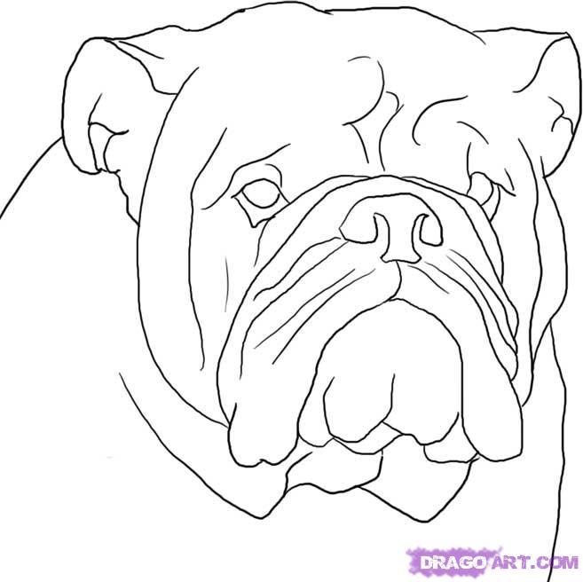 Drawn bulldog Home: Bulldog Images Concept Design