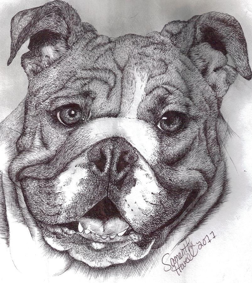 Drawn bulldog Howell Drawing Samantha by Samantha