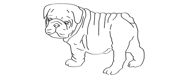 Drawn bulldog Bulldog by travel by poorly
