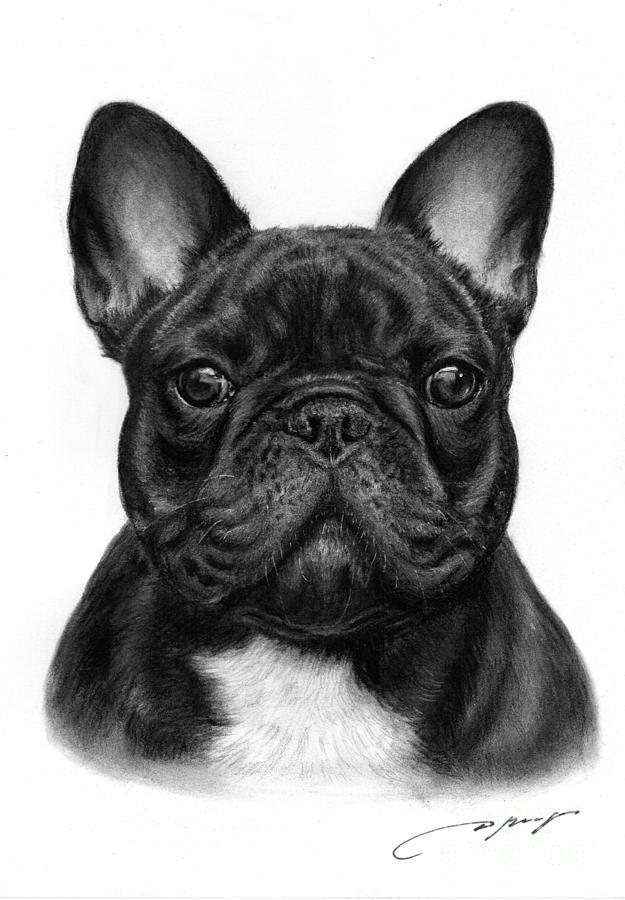 Drawn bulldog black and white Google Buscar bulldog con french