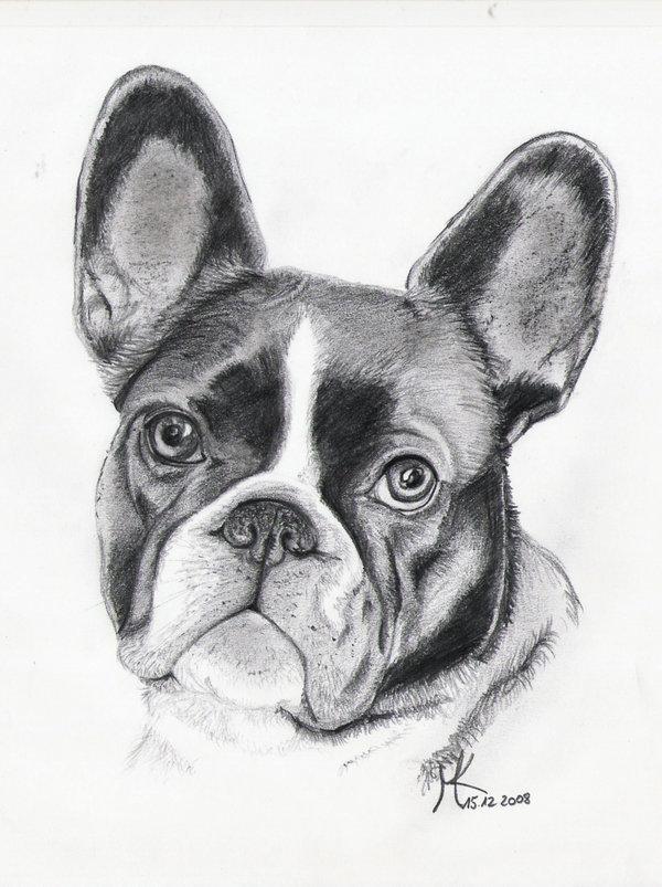 Drawn bulldog black and white And by French Black keyword