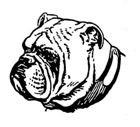 Drawn bulldog bulldog head The AND SKETCHES KENNELS Bulldog