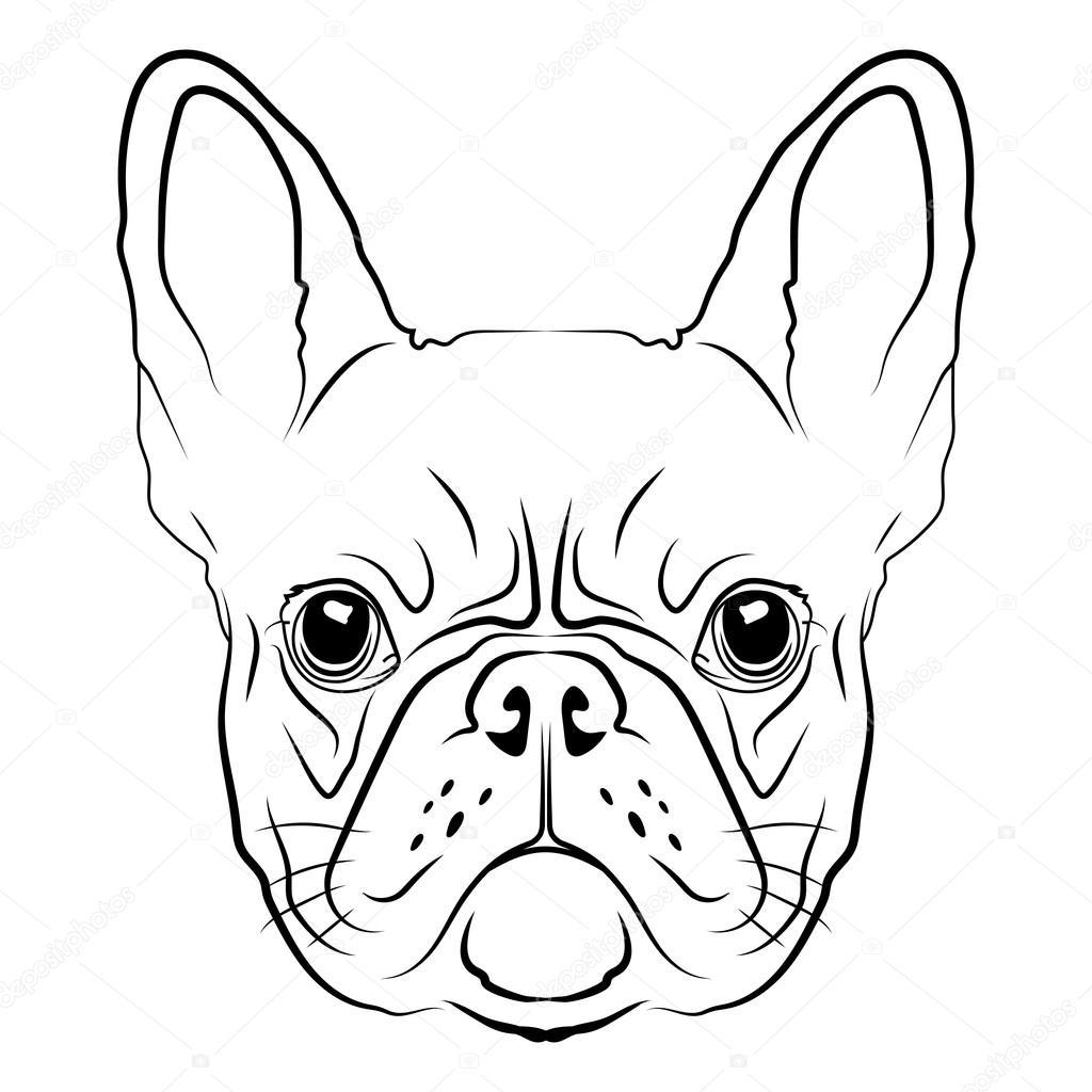 Drawn bulldog bulldog head French Stock Vector Vector French