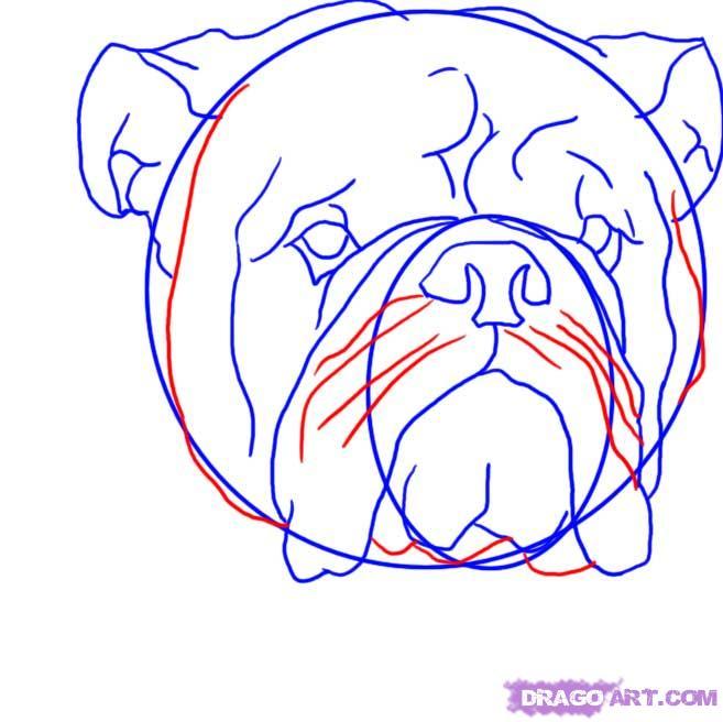 Drawn bulldog bulldog head How FREE a Bulldog bulldog
