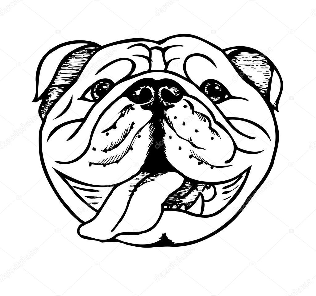 Drawn bulldog bulldog head English Stock Vector Vector English