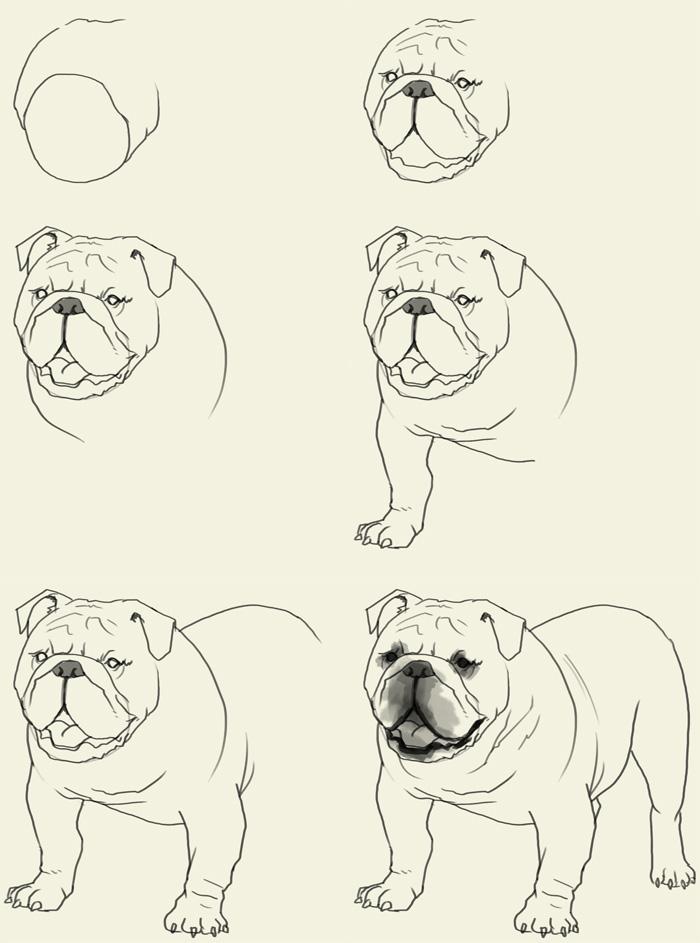 Drawn bulldog disney Bulldog to draw to how