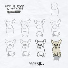 Drawn bulldog easy Ideas these one well bulldog