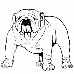 Drawn bulldog easy Bulldog step draw Animals step