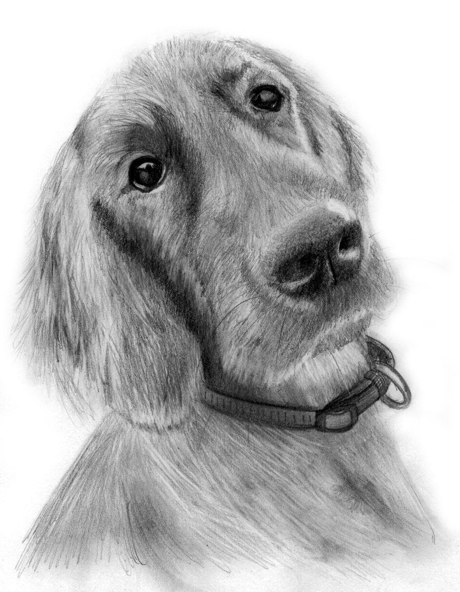 Drawn puppy pencil sketch Free Drawings Clip Of In