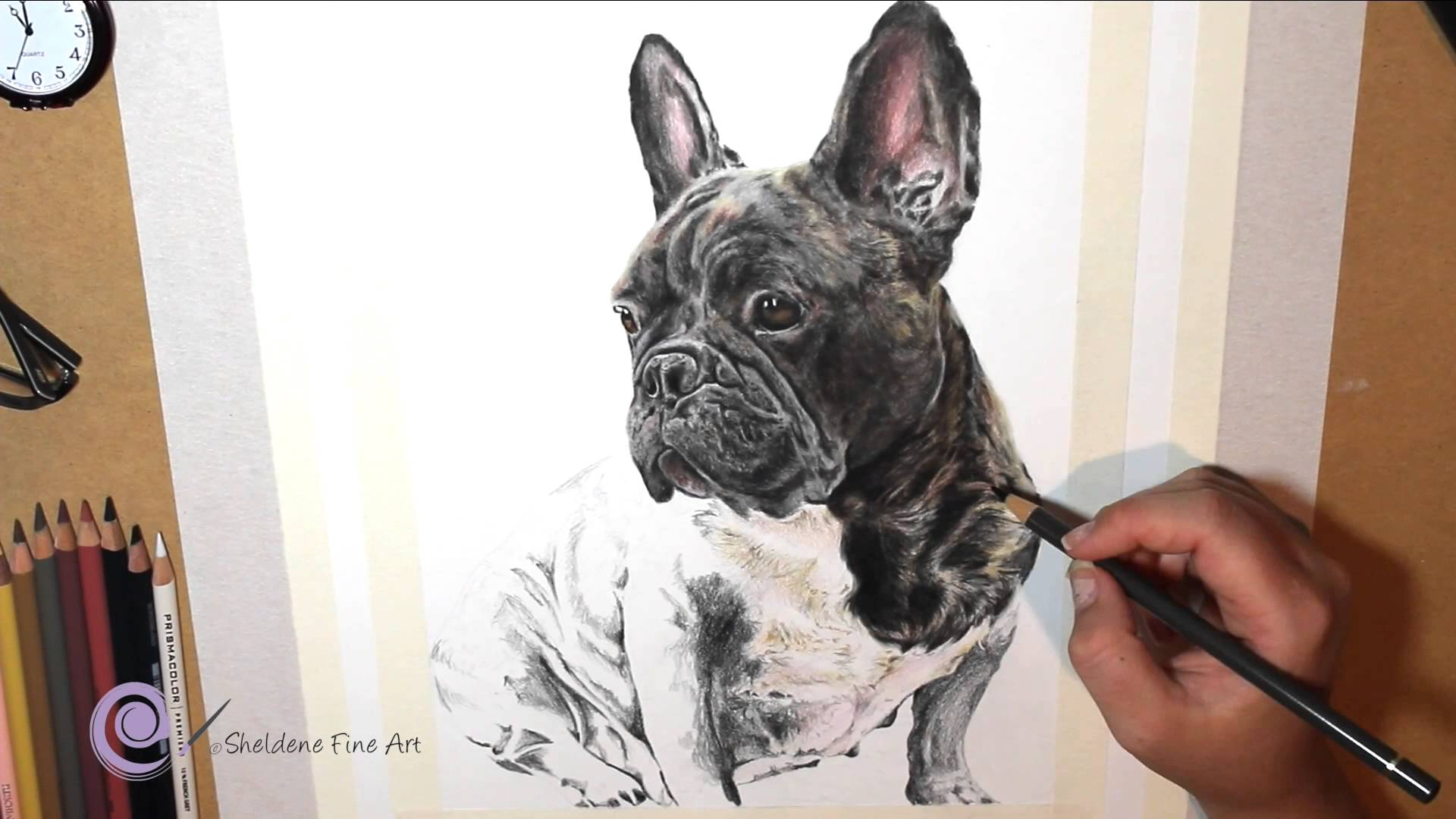 Drawn bulldog pencil drawing Bulldog of Pencil a
