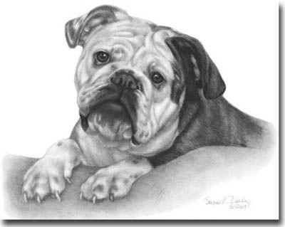 Drawn bulldog pencil drawing Logo 60 on Google best