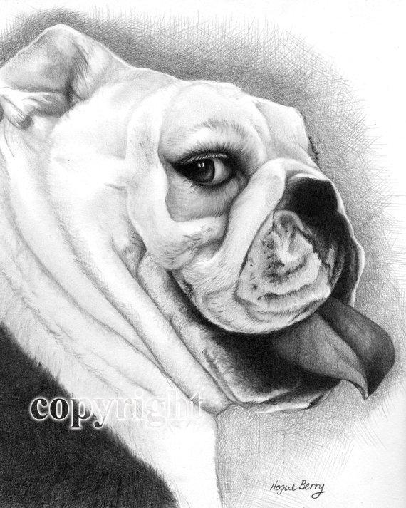 Drawn bulldog pencil drawing Drawing TheBerryPress Drawing by 00