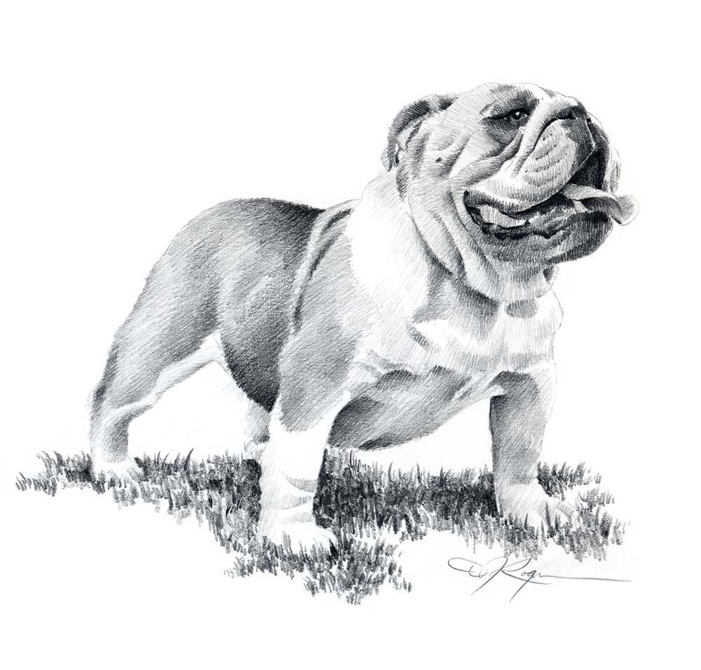 Drawn bulldog pencil drawing Pencil DJ Signed Bulldog Art