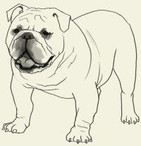 Drawn bulldog pencil drawing Draw Painting on elementary How