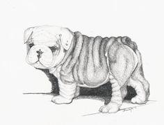 Drawn bulldog pencil drawing Of wrinkles Angels all Pencil