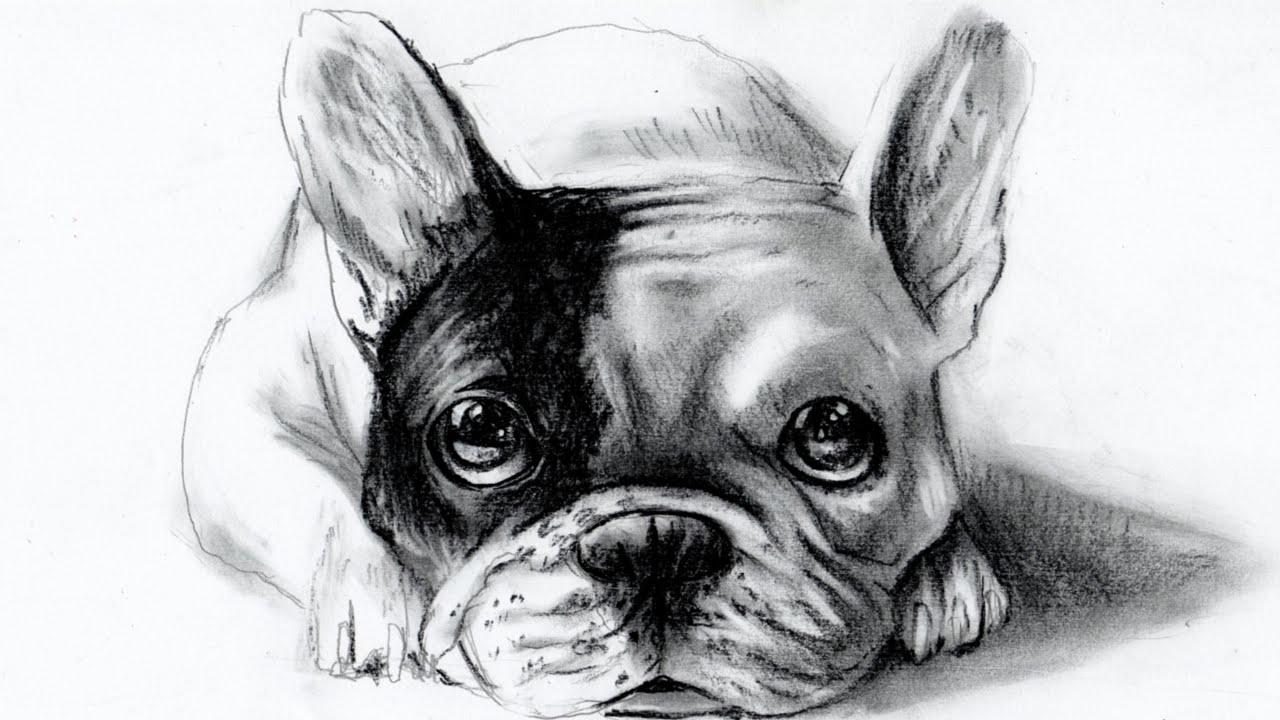 Drawn bulldog pencil drawing Dog (bulldog disegnare disegnare Bulldog)