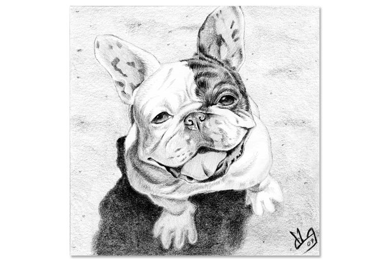 Drawn bulldog pencil drawing Of bulldog French a nice